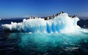 polo sur pinguinos DM