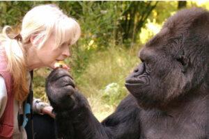 animales que hablaron